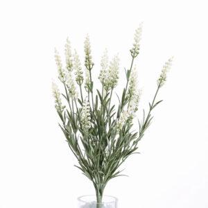 Lavendel Bush (Lavender), White