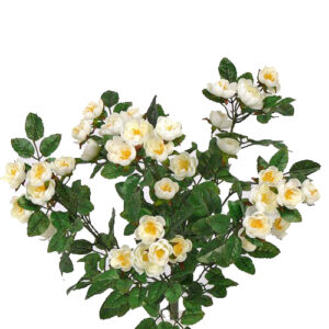 Rose Cabbage Plant, White
