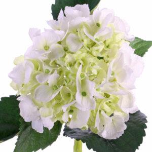 Hydrangea De Luxe, White/Green