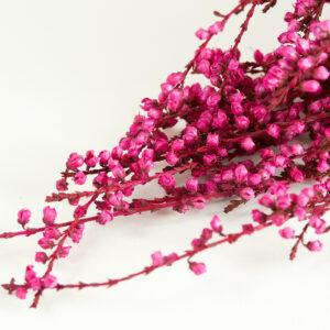 Preserved Heather, Dyed Fuchsia
