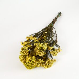 Preserved Rice Flower Yellow
