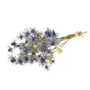 Eryngium, Blue Star, Natural