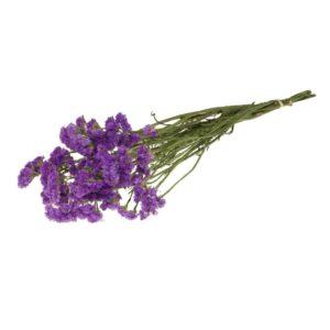 Statice sinuata dark lilac