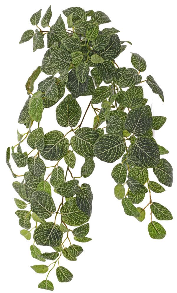 Fittonia Bush, 178 leaves