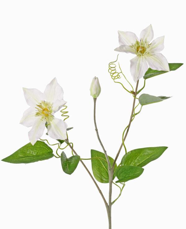 Clematis, Garden Art, White