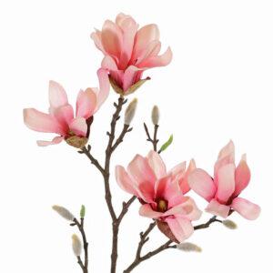 Magnolia Stellata, Small, Pink
