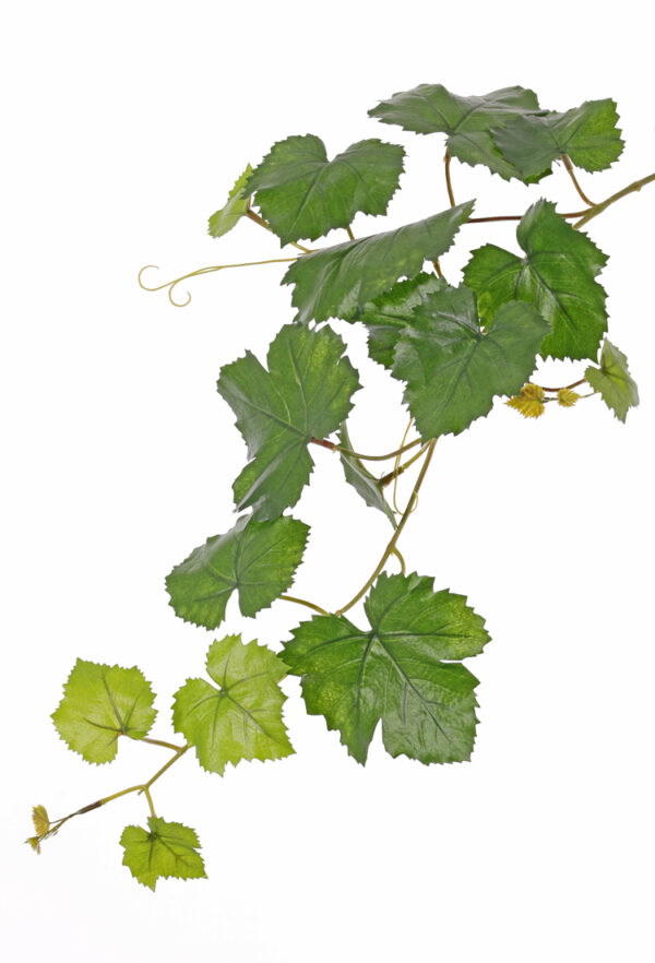 Grape Leaf Branch
