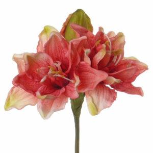 Amaryllis, Hippeastrum, Pink