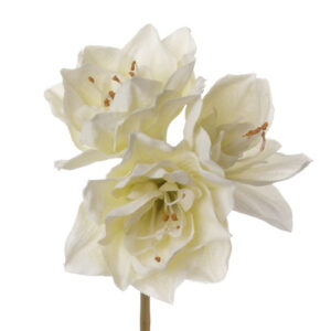 Amaryllis, Short, Cream