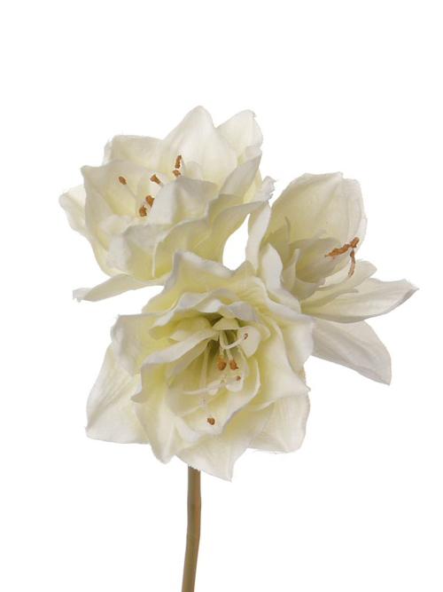 Amaryllis, Short, Cream