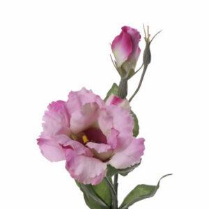 Lisianthus Deluxe, Pink