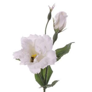 Lisianthus Deluxe, White