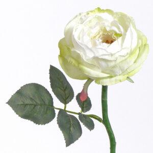 Rose Luna Deluxe