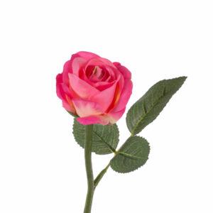 Rose Nina, Pink
