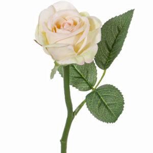 Rose Nina, Cream