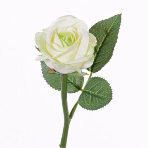 Rose Nina, White/Green