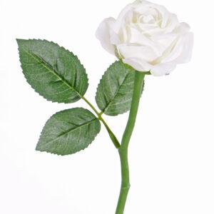 Rose Nina, White