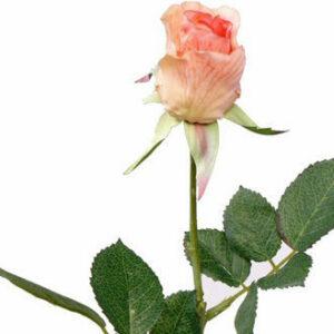 Rose Gina