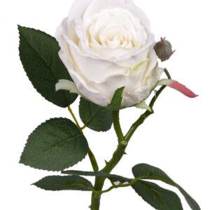 Rose Jessica
