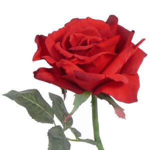 Rose Quiannie, Red