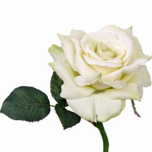 Rose Quiannie, White/Green