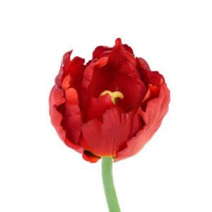Tulip Parrot Deluxe