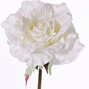 Snowy Rose, White