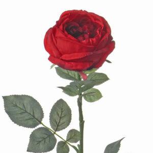 Rose Cabbage Luna