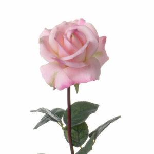 Rose Caroline, Large, Light Pink