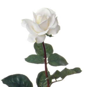 Rose Caroline, Large, White