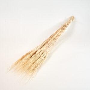 Wheat, bearded, bleached