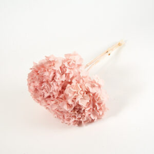 Preserved Hydrangeas Pink