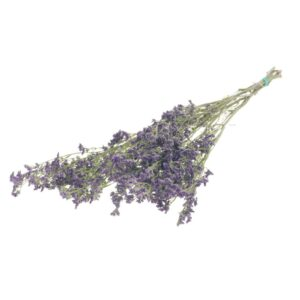 Limonium Natural Purple