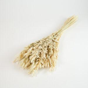Dried Oats, Ecru