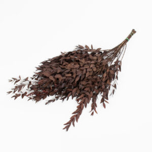 This is an image of a red Eucalyptus Parvifolia bunch laid on a white background.