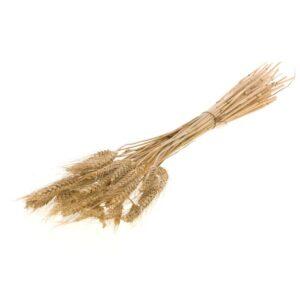 Wheat Grass, Natural