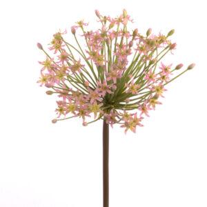 Allium Flowering Goliath, Pink