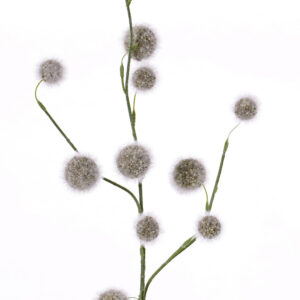 Allium Branch, Grey