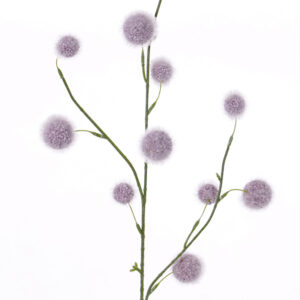 Allium Branch, Purple