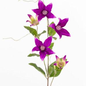 Clematis Spray, Purple