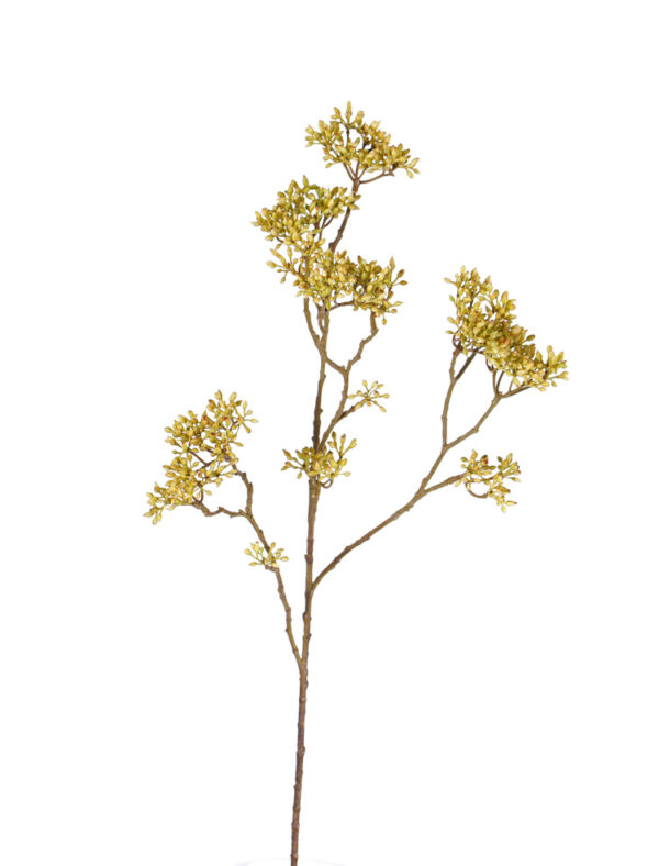 Dogwood Bud Branch