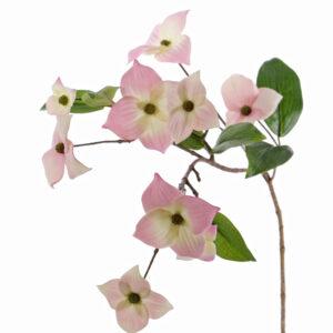 Japanese Dogwood, Pink