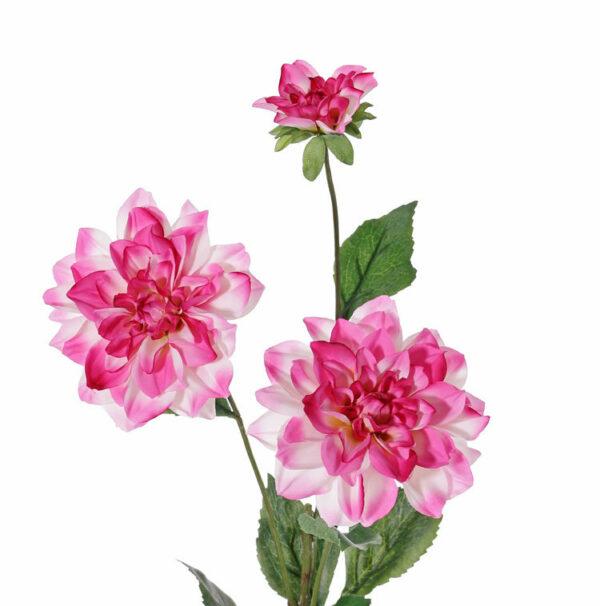 Dahlia New Beauty, Pink