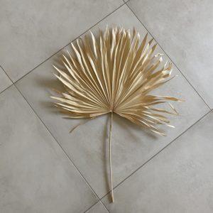 Fan Palm, 30-45cm