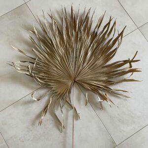 Dried Palm Fan, 60-90cm
