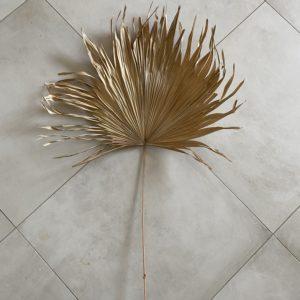 Dried Fan Palm, 45-60cm