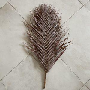 Dried Areca Palm, 90-100cm