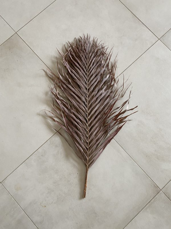 Dried Areca Palm, 90-100cm