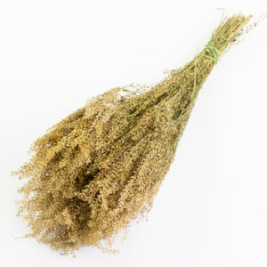 This image shows a bunch of dried, natural-coloured lepidium, on a white background.