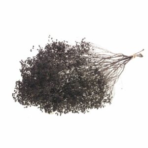 Broom Bloom, Deep Brown